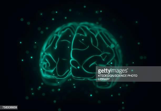 illustrations, cliparts, dessins animés et icônes de human brain, illustration - cerveau humain
