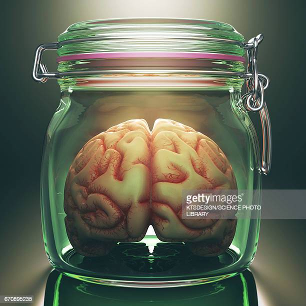 Human brain in glass jar