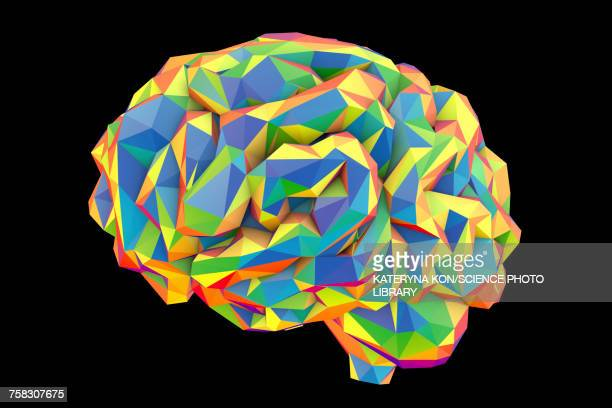 ilustraciones, imágenes clip art, dibujos animados e iconos de stock de human brain, low-polygonal illustration - cerebro humano
