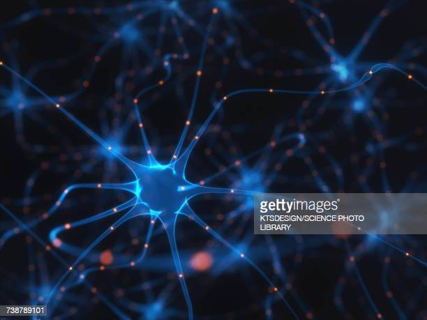Human brain nerve cells, illustration