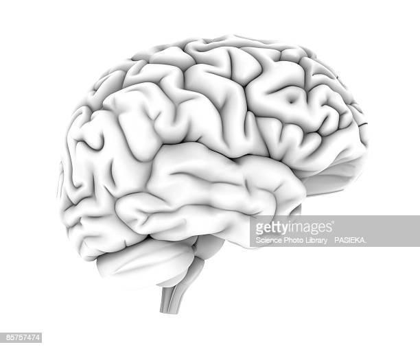 human brain, top view, computer artwork - brain  stock illustrations