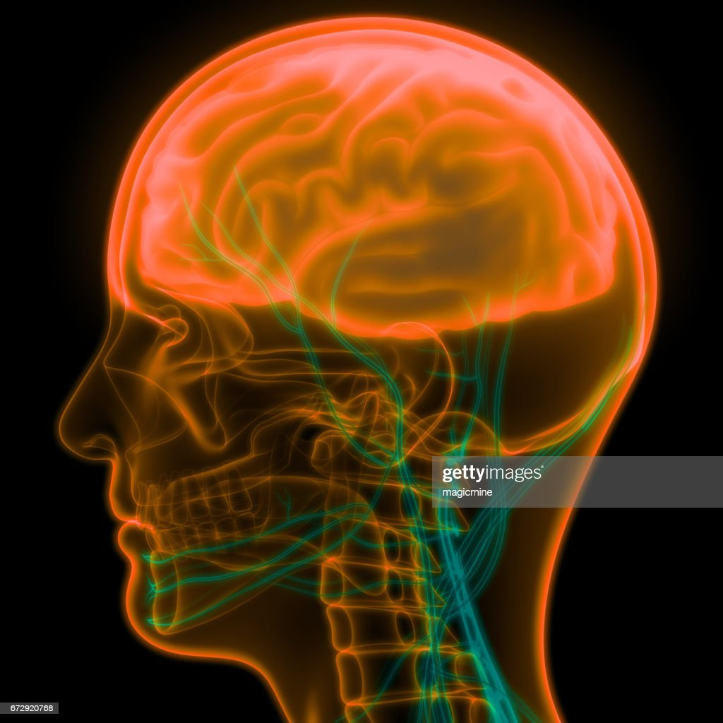 Human Brain With Nervous System Anatomy Stock Illustration | Getty ...