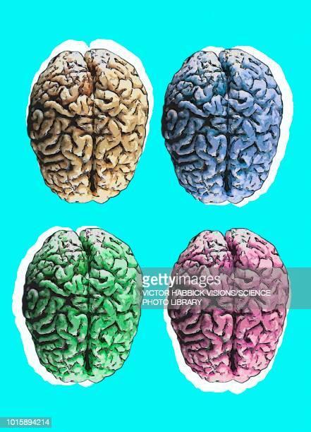human brains, illustration - four objects stock illustrations