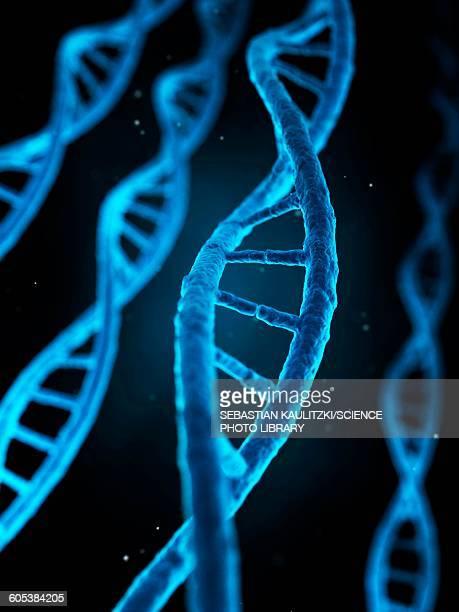 human dna, illustration - genetic research stock illustrations