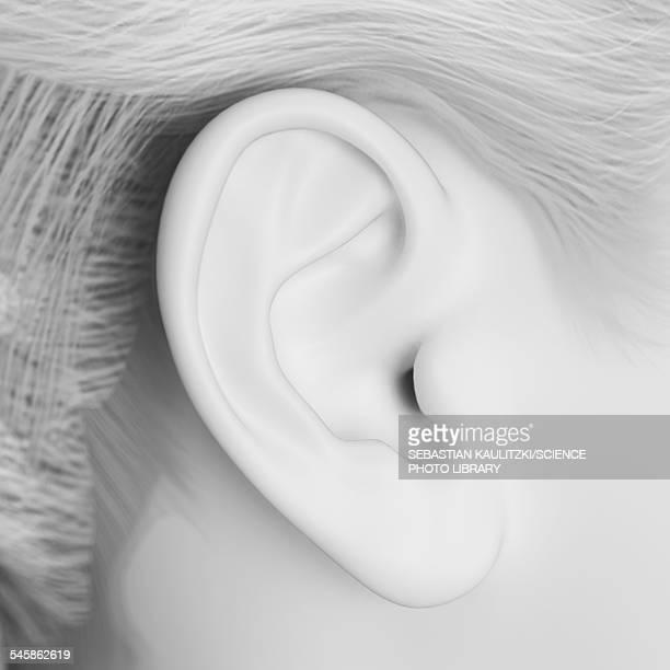 ilustraciones, imágenes clip art, dibujos animados e iconos de stock de human ear, illustration - oreja