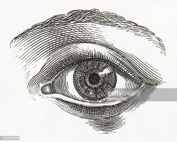 Human Eye Engraving
