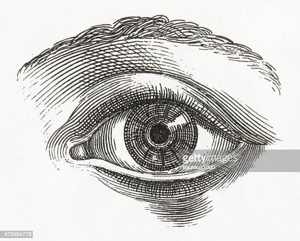 ilustrações, clipart, desenhos animados e ícones de olho humano aviso - olho