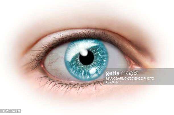 human eye, illustration - staring stock illustrations