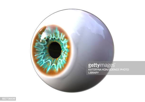 human eye, illustration - ophthalmology stock illustrations, clip art, cartoons, & icons