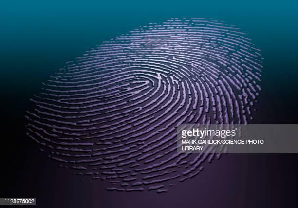 human fingerprint, illustration - natural pattern stock illustrations