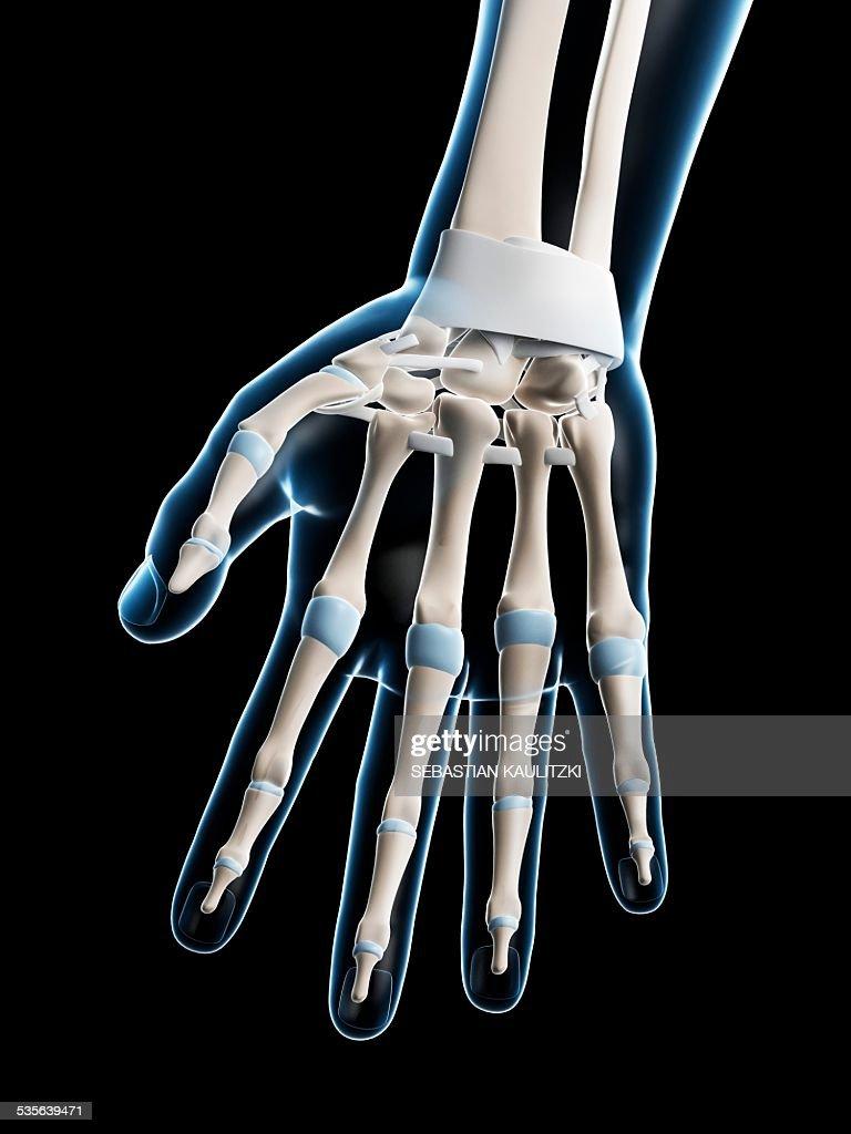 Human Hand Bones Artwork Stock Illustration Getty Images