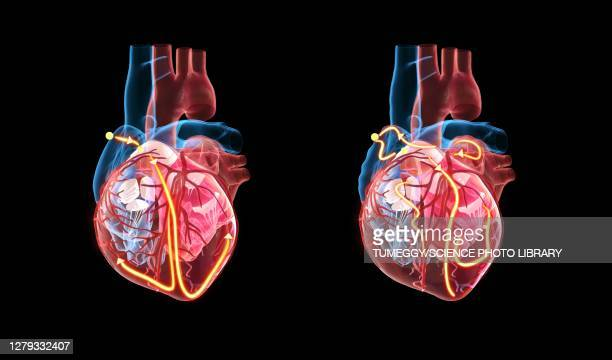 human heart and its electrical system, illustration - cardiac conduction system stock illustrations