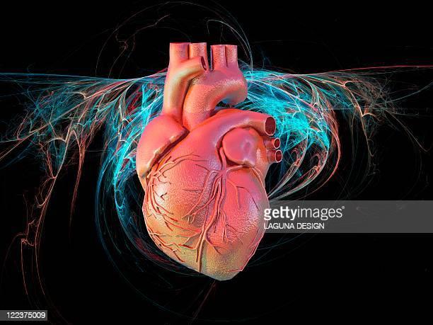 illustrations, cliparts, dessins animés et icônes de human heart, artwork - coeur humain