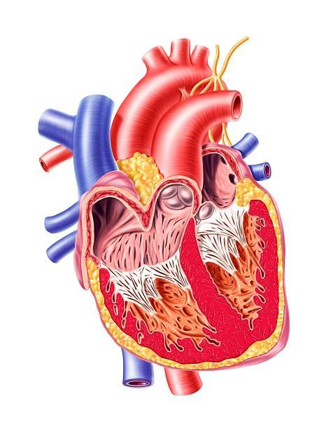 Human Heart, Artwork Wall Art