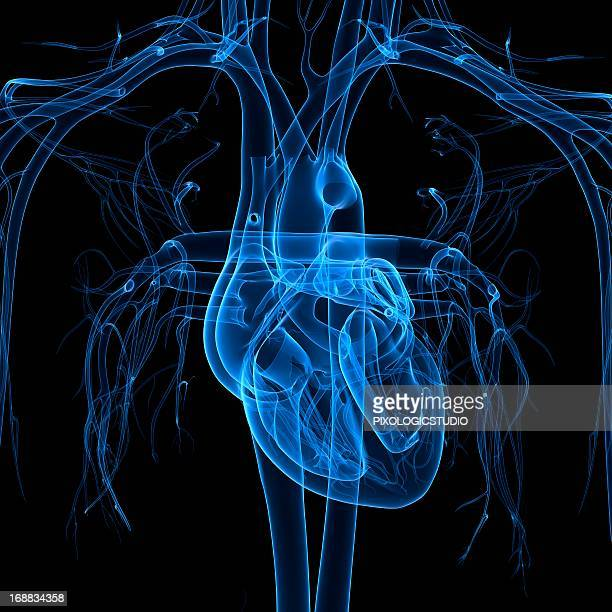 human heart, artwork - translucent stock illustrations