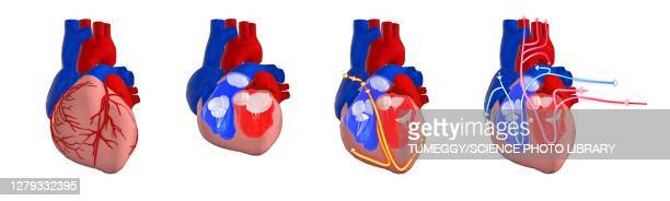 human heart circulatory and electrical system, illustration - human heart beating stock illustrations
