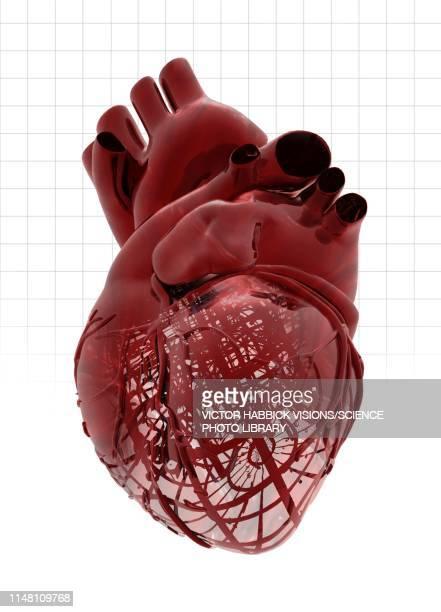 human heart, illustration - victor habbick stock illustrations