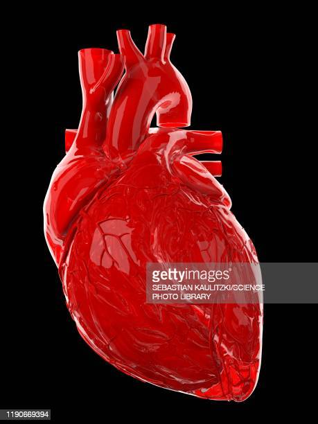 human heart, illustration - human body part stock illustrations