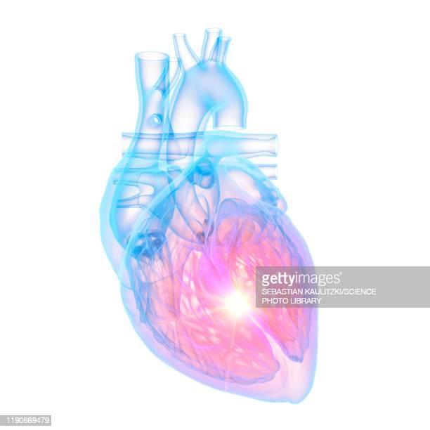 ilustraciones, imágenes clip art, dibujos animados e iconos de stock de human heart, illustration - pulmones humanos