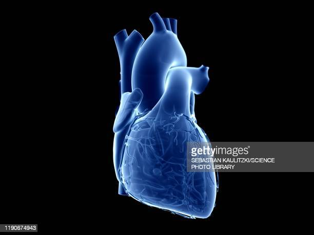 human heart, illustration - transparent stock illustrations