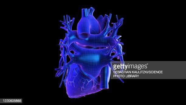 human heart, illustration - triangle shape stock illustrations