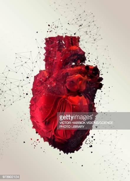 illustrations, cliparts, dessins animés et icônes de human heart, illustration - organe interne humain