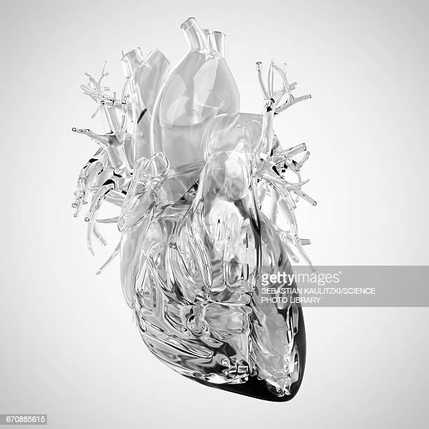 human heart rendered in glass - human body part stock illustrations, clip art, cartoons, & icons
