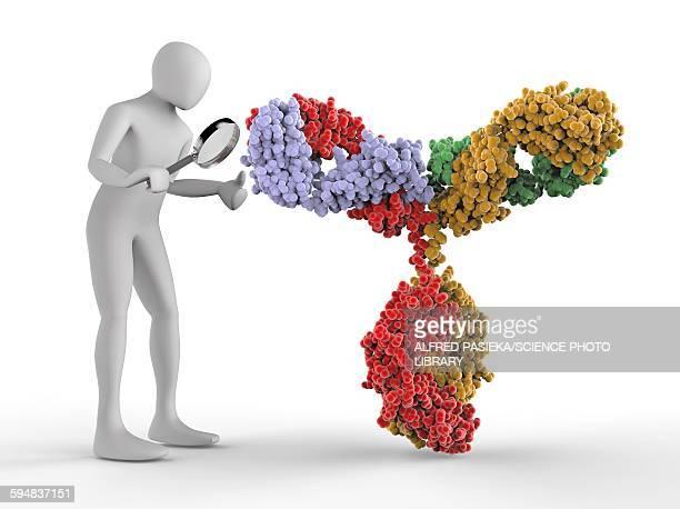 3d human inspecting an antibody molecule - antibody stock illustrations, clip art, cartoons, & icons