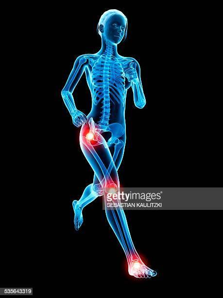Human joints, illustration