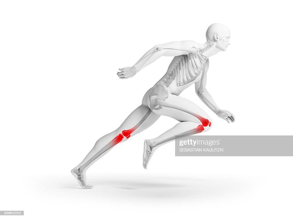 Human Knee Anatomy Illustration Stock Illustration Getty Images