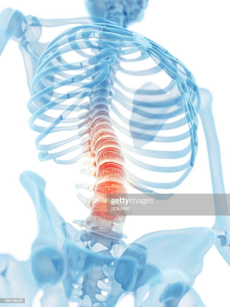 Human Lumbar Spine Artwork Stock Illustration Getty Images