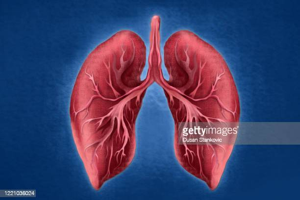human lungs - asthmatic stock illustrations