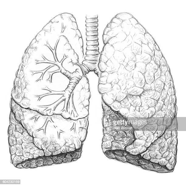 lung stock illustrations and cartoons