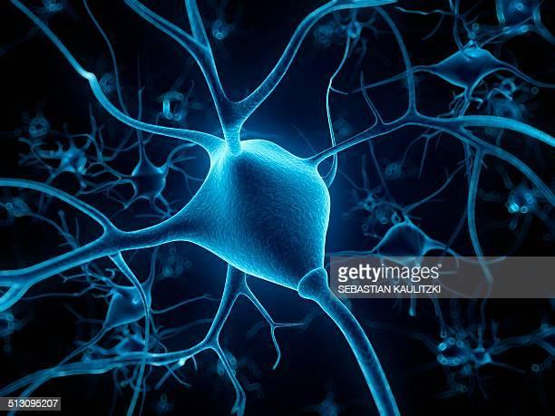 human nerve cell, artwork - nerve cell stock illustrations