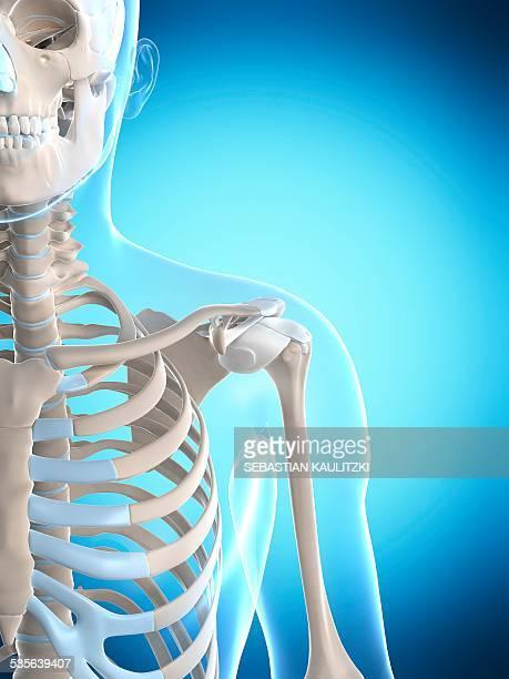 human shoulder, artwork - 靭帯点のイラスト素材/クリップアート素材/マンガ素材/アイコン素材