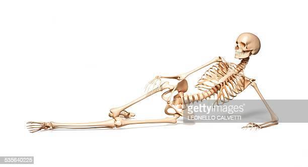 ilustraciones, imágenes clip art, dibujos animados e iconos de stock de human skeletal system, artwork - esqueleto humano