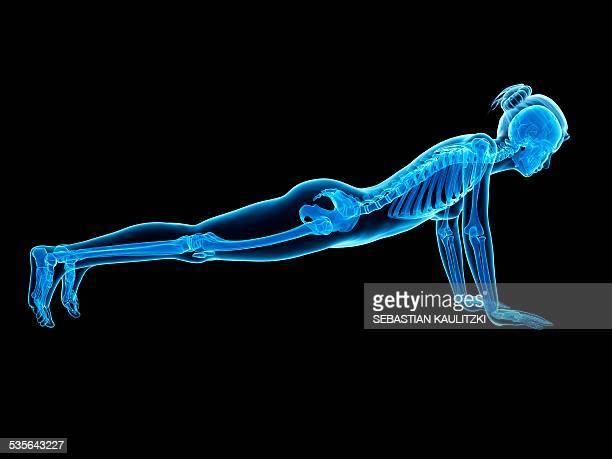 human skeletal system, illustration - bones stock illustrations, clip art, cartoons, & icons