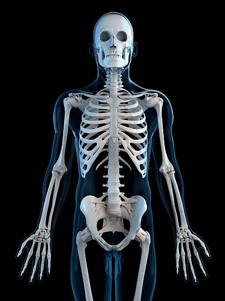 Human Skeleton, Artwork Wall Art