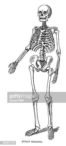 60 Top Arm Bones Stock Illustrations, Clip art, Cartoons and