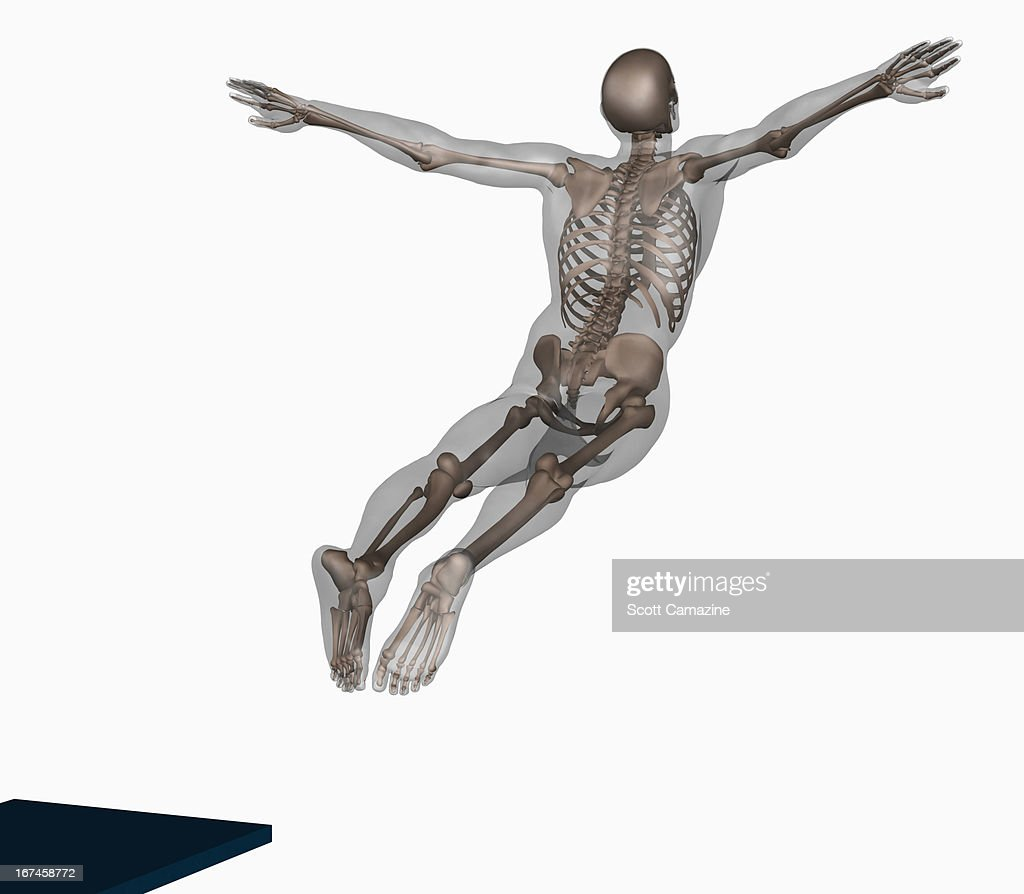 Human skeleton jumping off trampoline on white background : Stock Illustration
