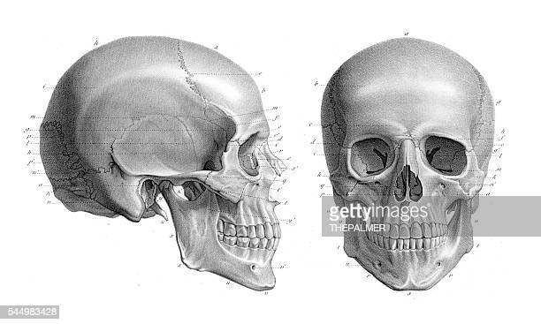 Human skull anatomy illustration 1866