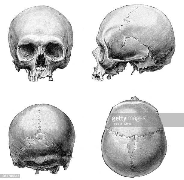 ilustraciones, imágenes clip art, dibujos animados e iconos de stock de ilustración de anatomía del cráneo humano 1894 - ilustración biomédica