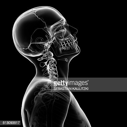 Human Skull And Neck Bones Artwork Stock Illustration | Getty Images