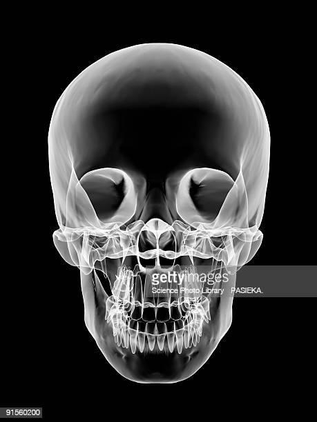 human skull - human representation stock illustrations