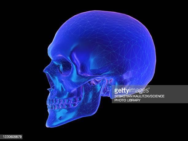 human skull, illustration - triangle shape stock illustrations