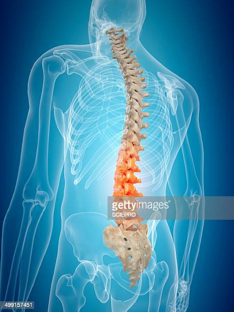 human spine, artwork - spine stock illustrations