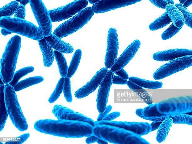 human x chromosomes, illustration - chromosome stock illustrations