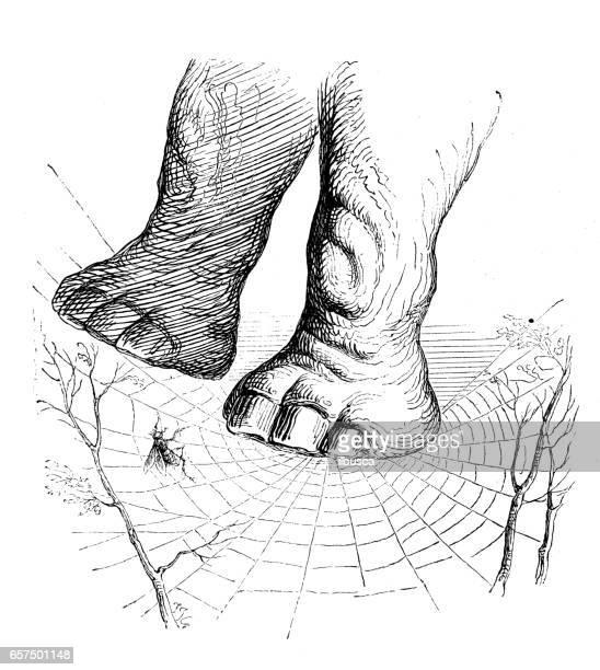Humanisé illustrations d'animaux: éléphant sur la toile d'araignée