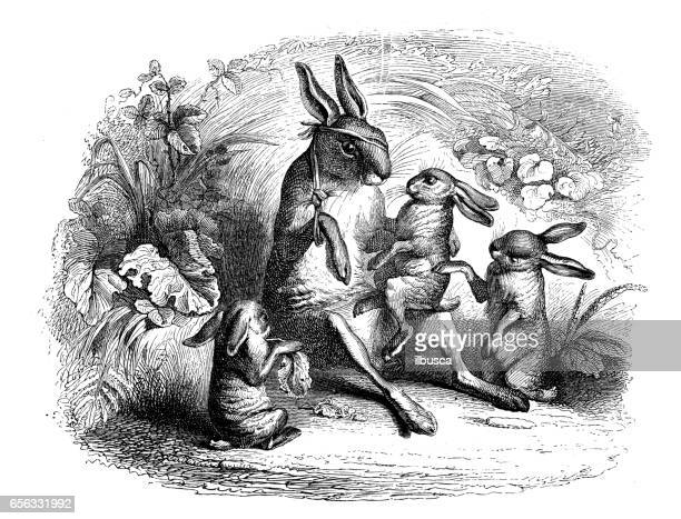 Gehumaniseerd dieren illustraties: familie Haas