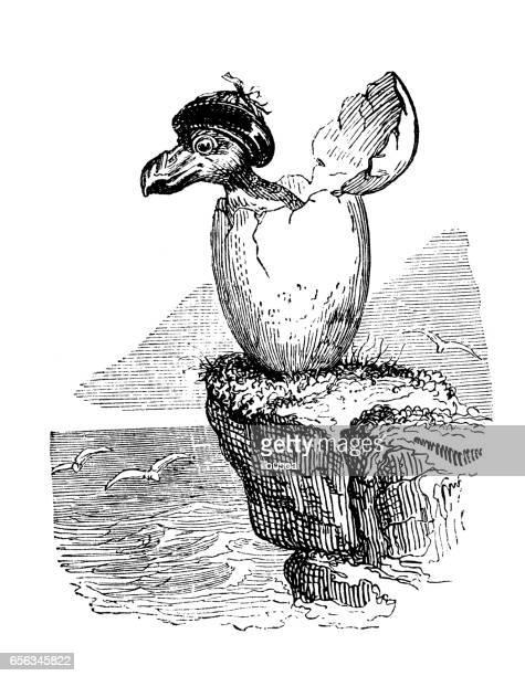 ilustrações, clipart, desenhos animados e ícones de humanizado ilustrações de animais: nascimento de pinguim - animal egg